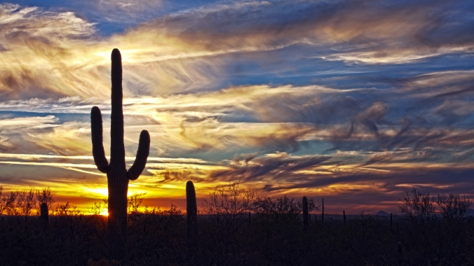 halo-of-the-saguaro